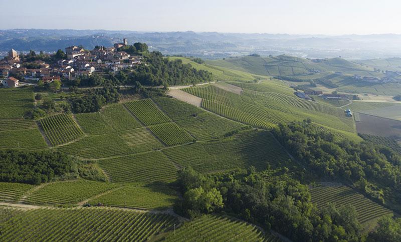 vigne-barolo-docg
